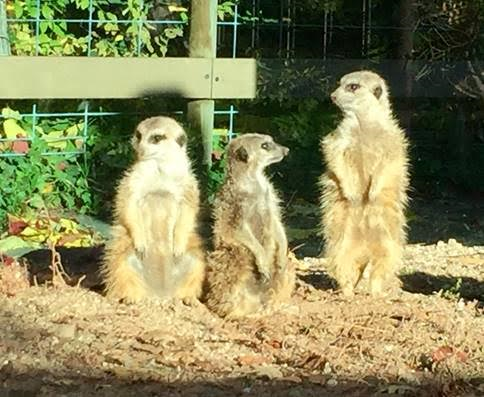 Photos courtesy Charles Paddock Zoo