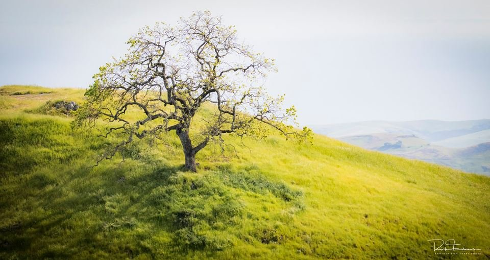 Photo of Paso Robles by Rick Evans