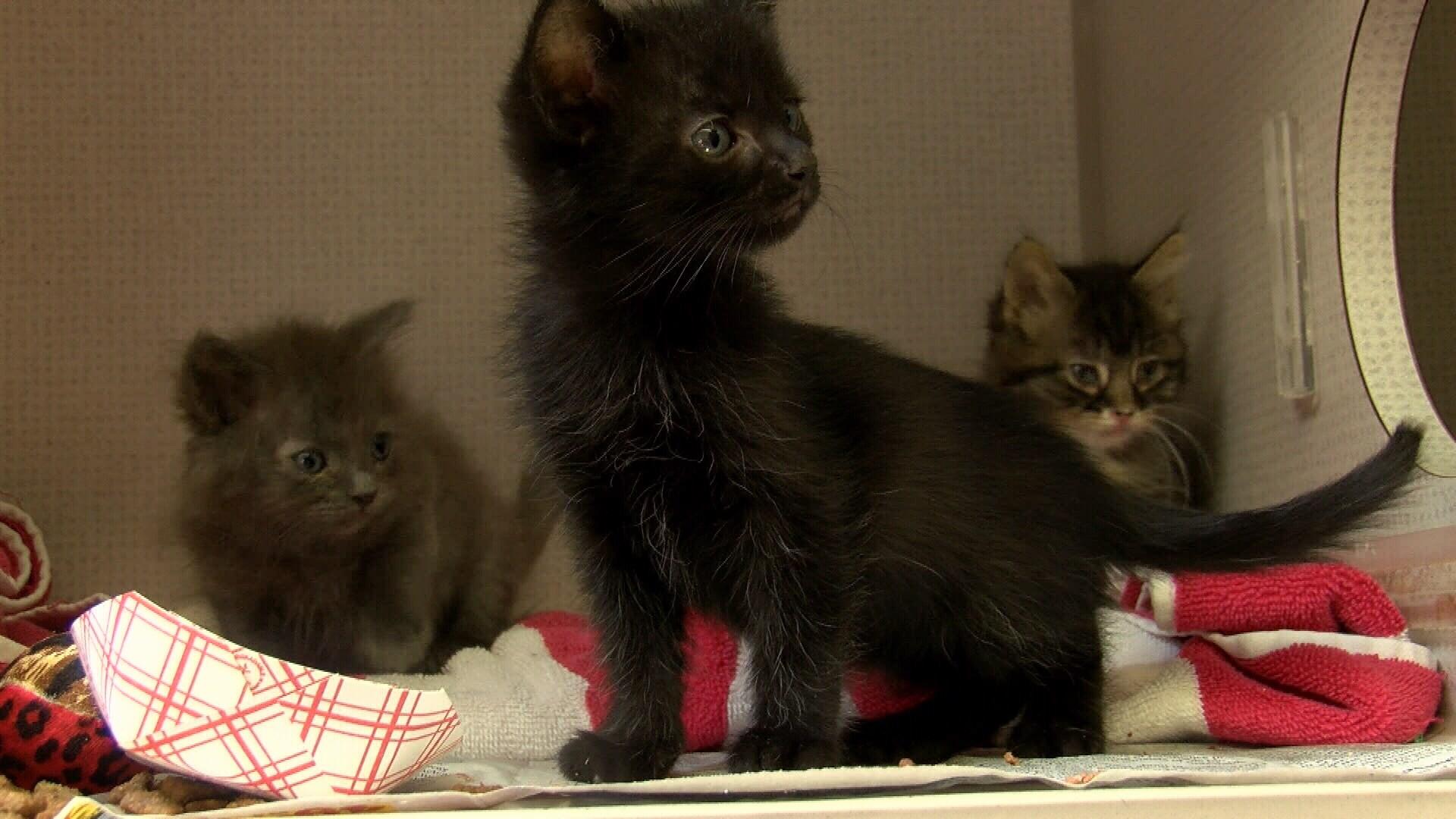 Kittens at San Luis Obispo County Animal Services. (KSBY photo)