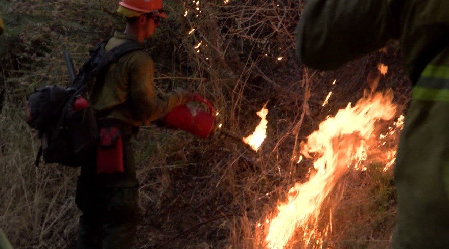 Firefighters conduct a firing operation at the Alamo Fire. (KSBY photo)
