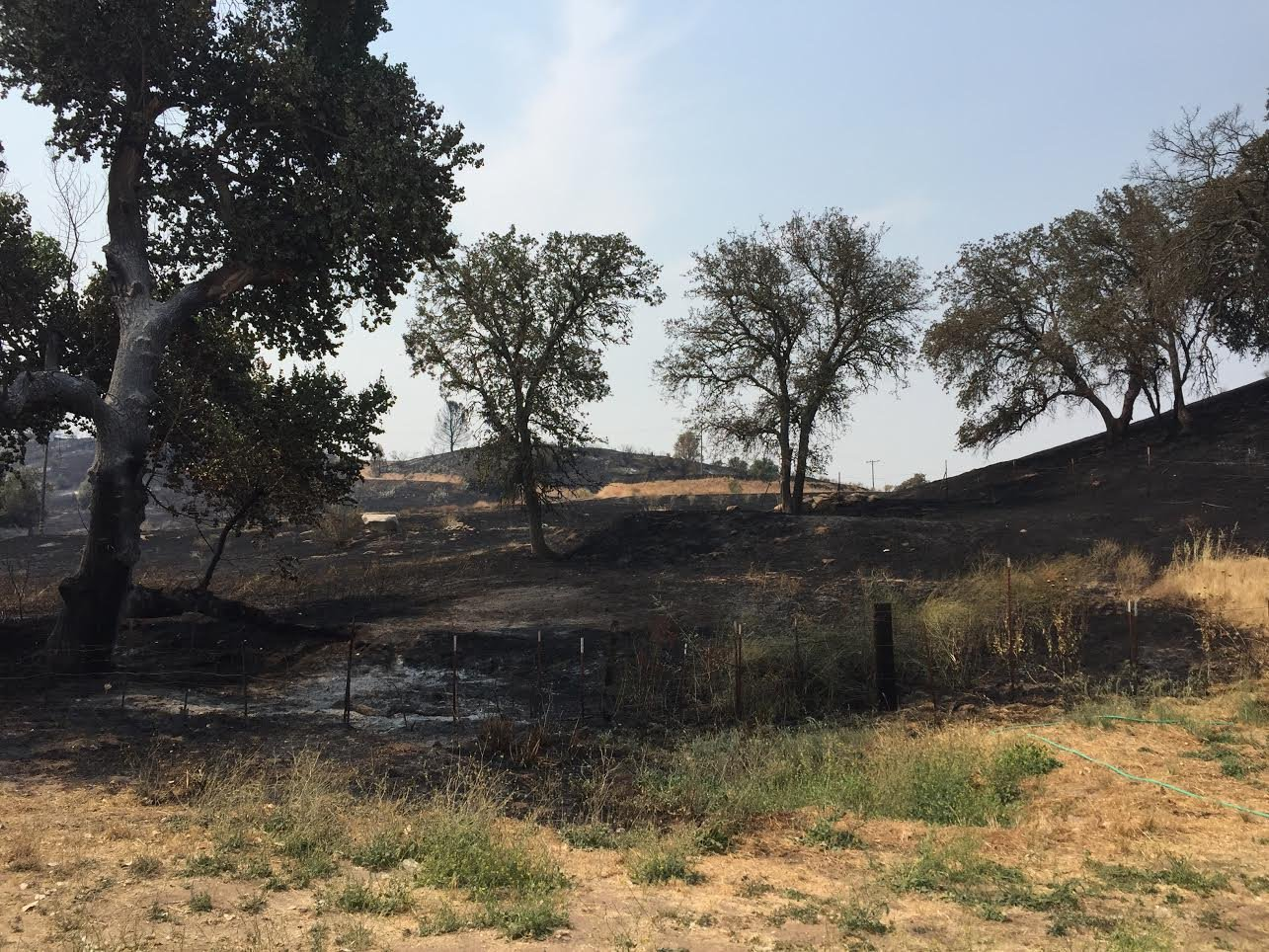 Burned hillsides at the Stone Fire. (KSBY photo)