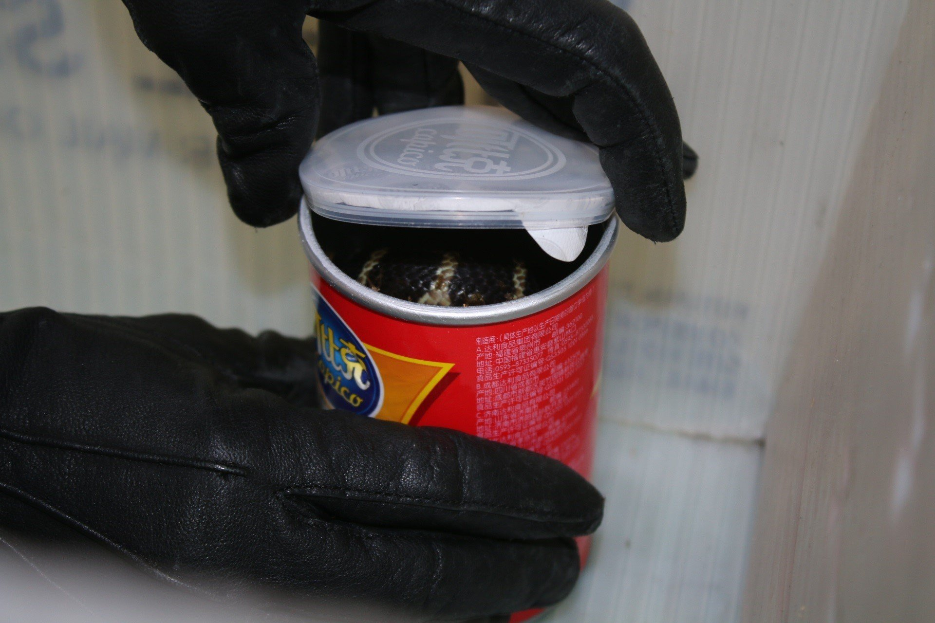 Los Angeles man arrested for smuggling king cobras in potato chip cans