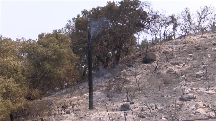 A hillside burned in the Whittier Fire. (KSBY photo)
