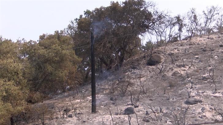 A hillside burned in the Whittier Fire. (KSBY photo)