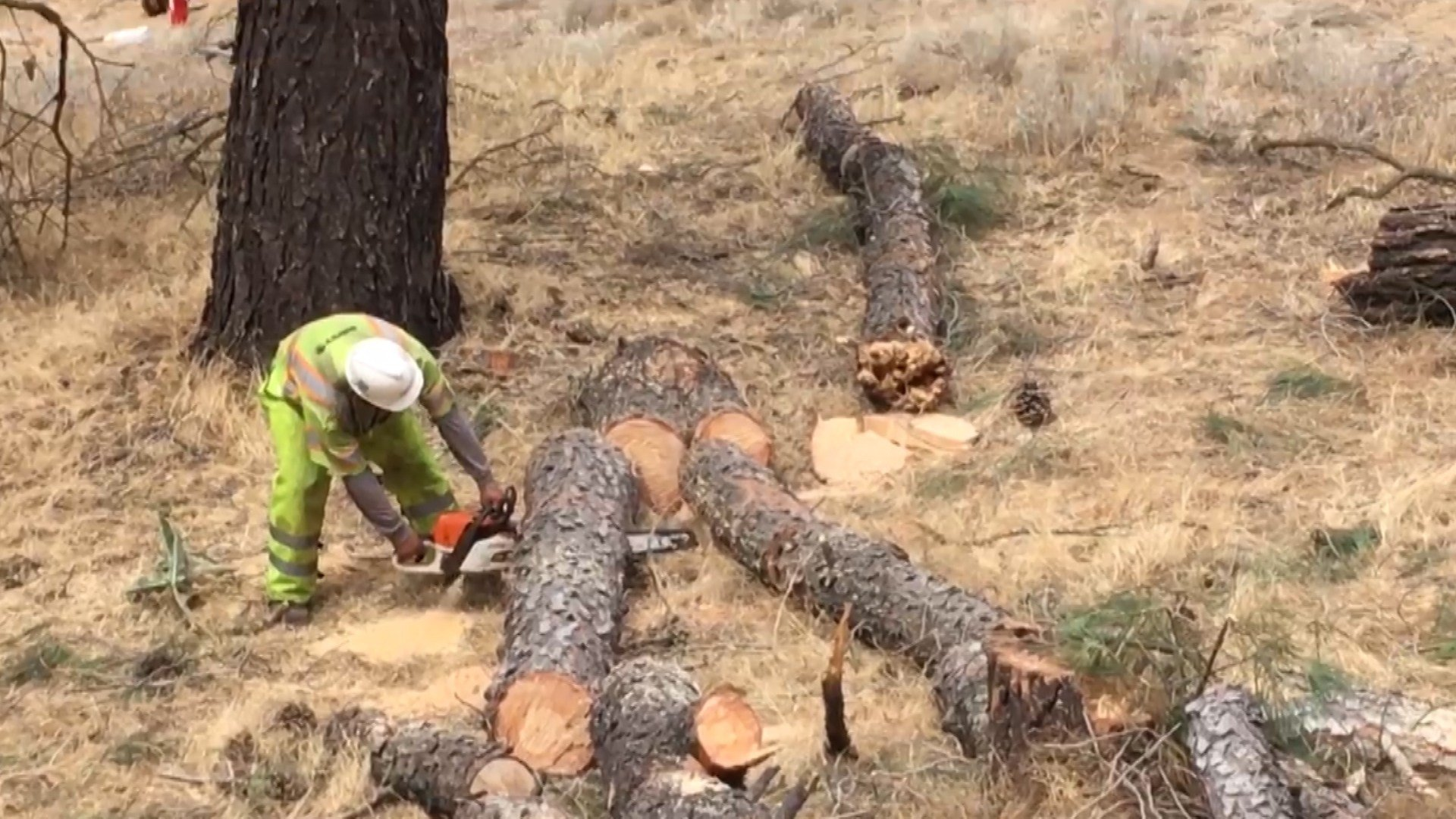 Crews remove potentially hazardous trees near power lines. (Photo courtesy PG&E)