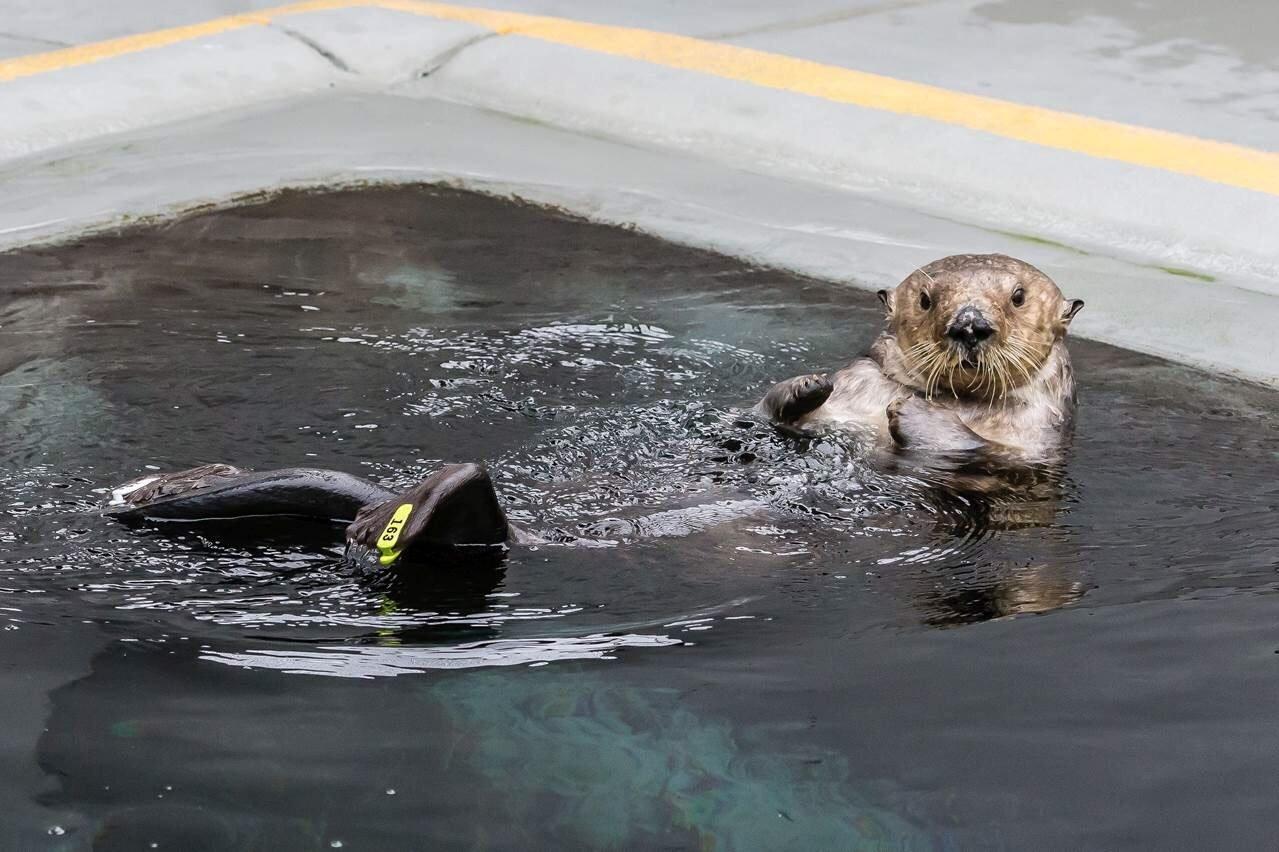 (Credit: Marine Mammal Center)