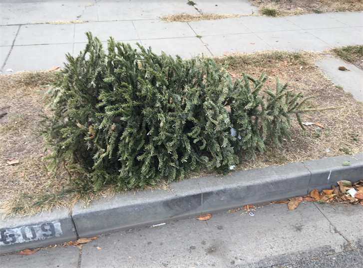 County Offers Free Christmas Tree Recycling