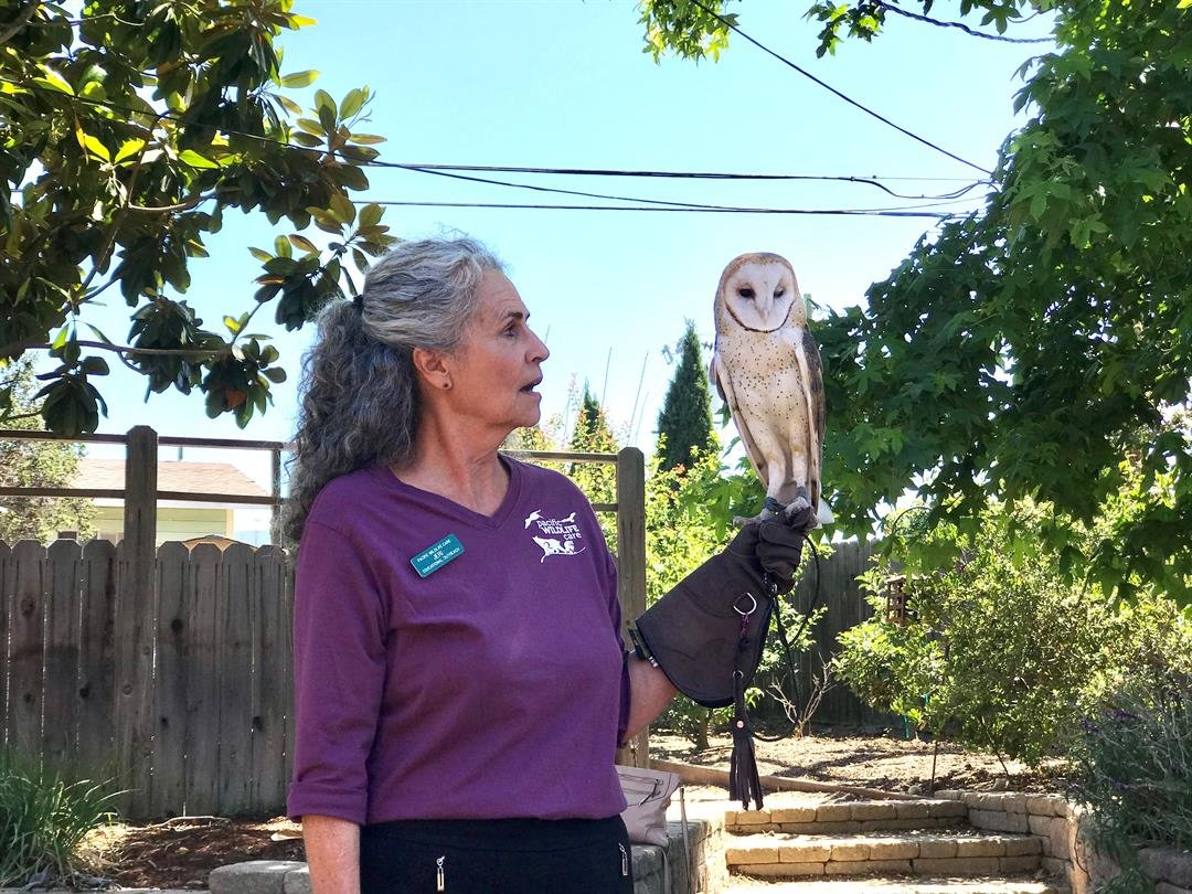 A Pacific Wildlife Care representatives shows off a rescued owl at McKaila's birthday party. (Photo courtesy Kris Lewis)