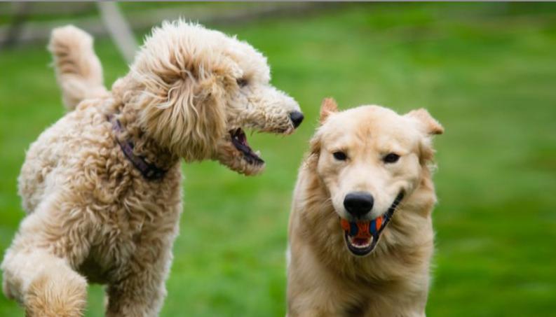 U.S. Senate unanimously passes bill to stop animal cruelty