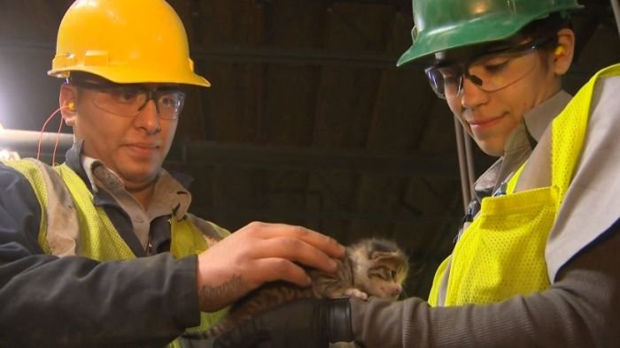 A tiny kitten was snatched from a recycling center conveyor belt moments before it would have hit spinning blades. (KCRA)