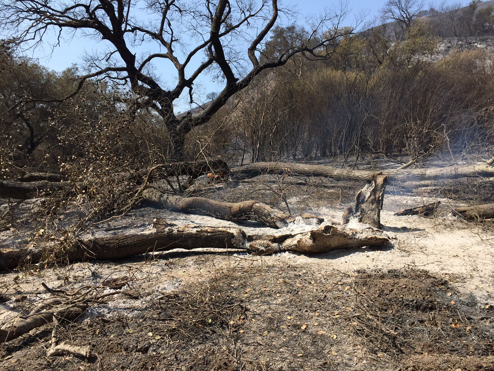 Trees and brush scorched by the Rey Fire. (KSBY)