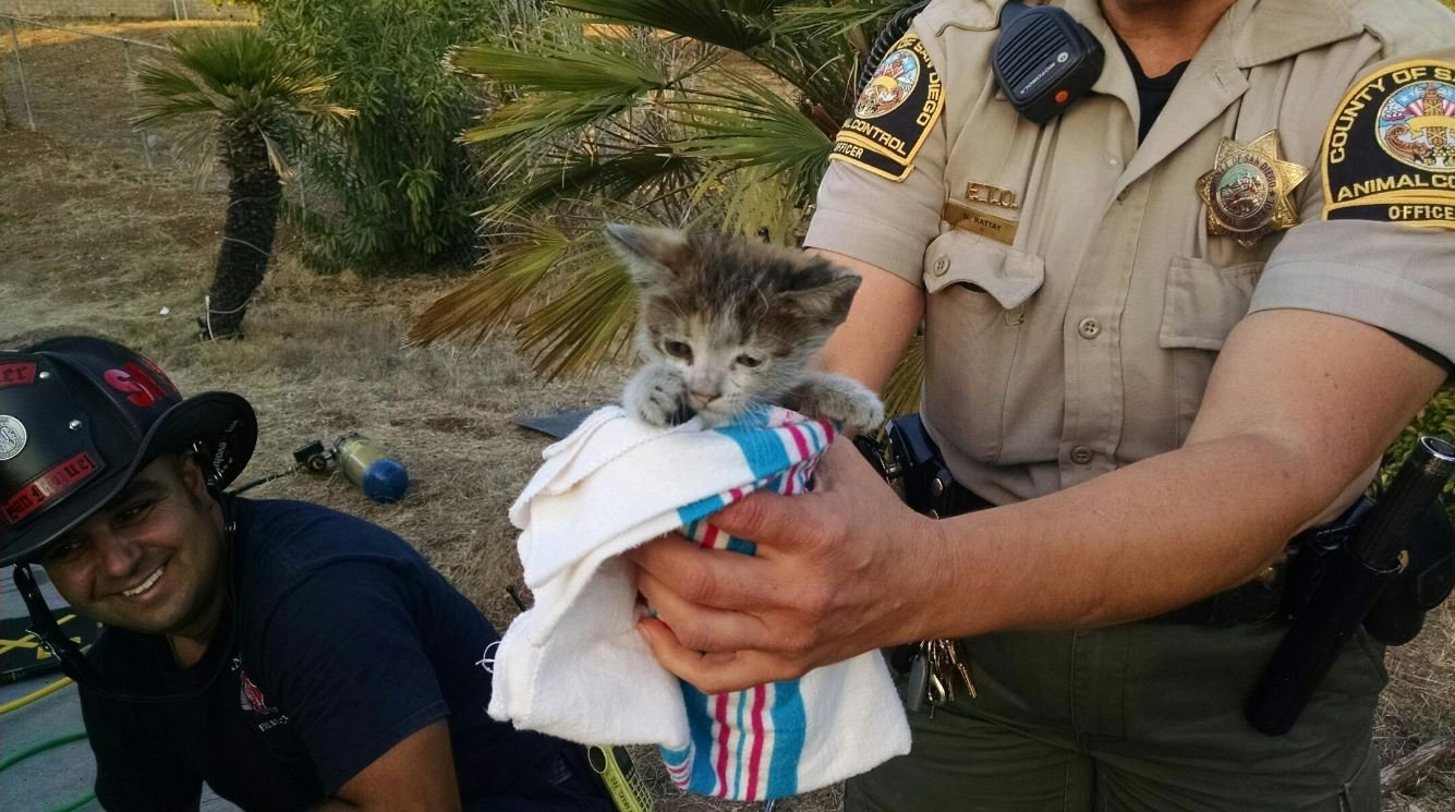 Firefighters save feral kitten in San Diego County KSBY